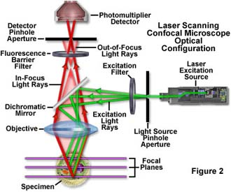 Microscope Optics - University of Victoria - Web.UVic.ca
